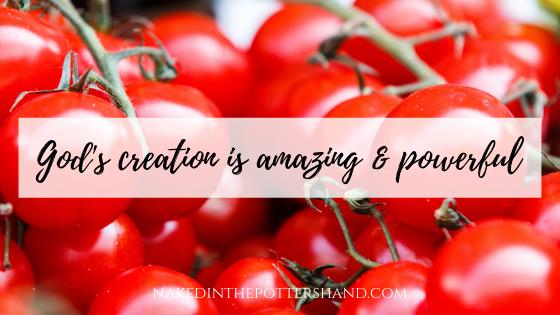 Crunchy blog 1